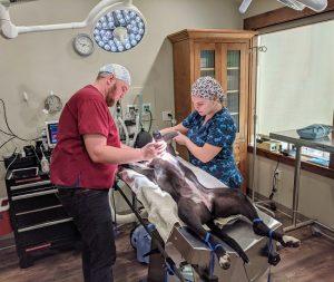 mother lode veterinary internship bitney prep